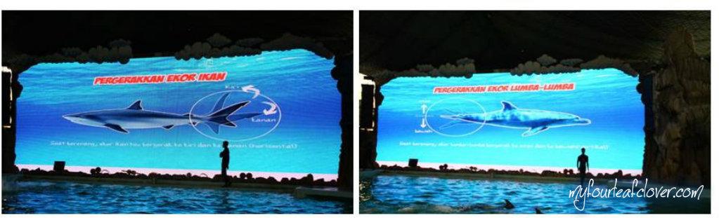 Ternyata, pergerakan ekor lumba-lumba berbeda dengan pergerakan ekor ikan lainnya. Kalau ikan pada umumnya ekornya bergerak ke kanan dan ke kiri, ekor lomba-lumba bergerakan ke atas dan ke bawah.