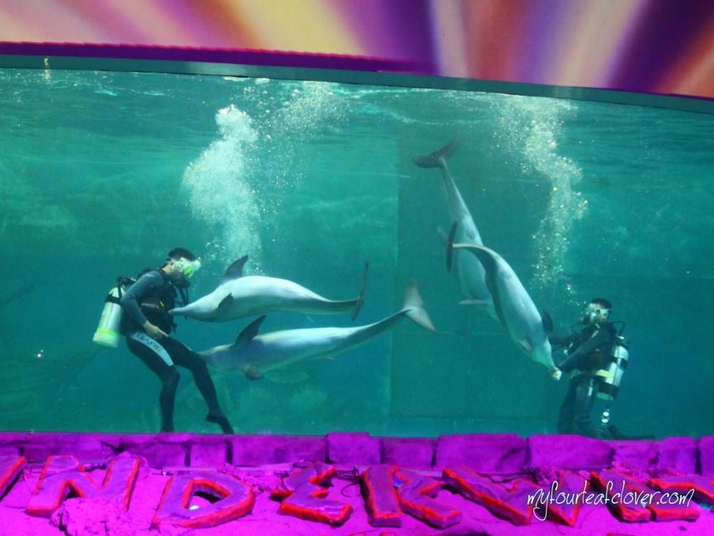 underwater-show-ancol