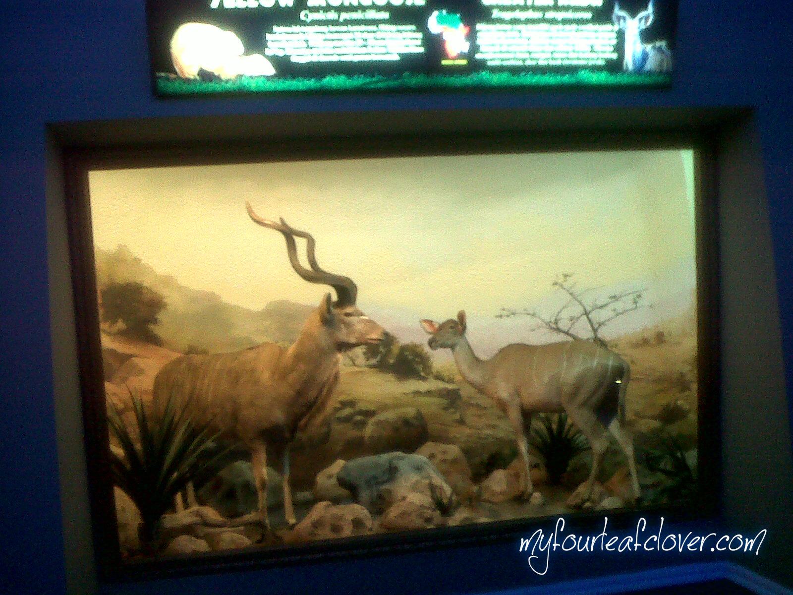 Salah satu diorama di Museum Satwa