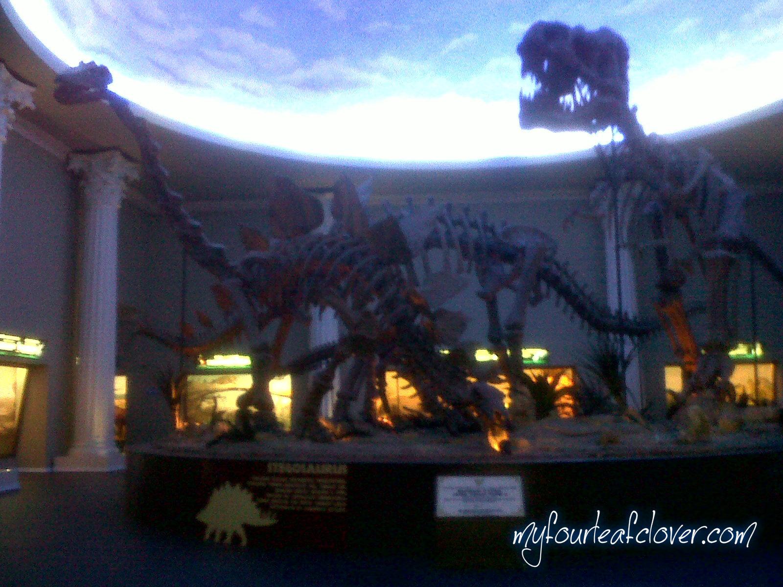 Fosil keluarga Dinosaurus