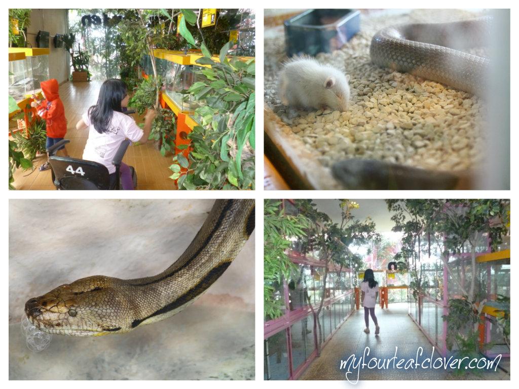 Ini adalah Reptil Garden. Huaa.. kasian tikusnya :(