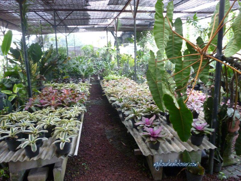 Ini tanaman-tanaman yang dijual. Tidak terlalu banyak macamnya (mau cari tanaman buah tidak ada) dan harganya agak mahal