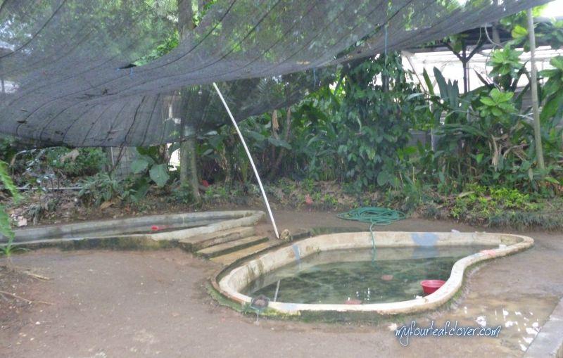 ini kolam apa ga jelas, kotor banget. Kata Edward ada ikannya kecil-kecil.